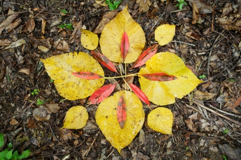 YN_Autumn Immersion_Leaf Mandala 2017