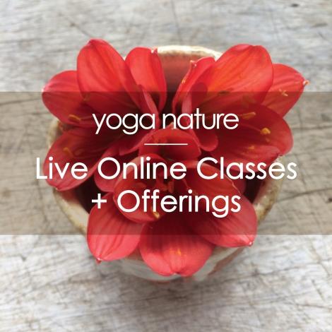 YN – Online Classes Main Image